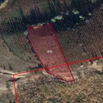 Hendek Güldibi Satılık Fındık Bahçesi 7658 m2