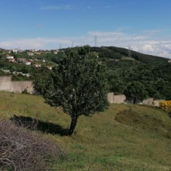 Beykoz Çavuşbaşı Baklacı mahallesi 941 M2 Satılık Arsa