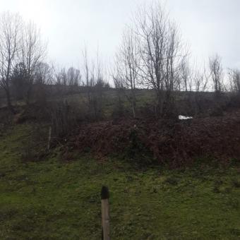 Düzce Yığılca Hacılar Köyü 4316 M2 Satılık Yatırımlık Arsa